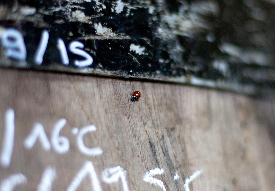 Notre méthode : la vinification semi-carbonique